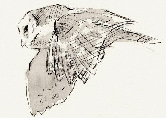 John Busby. Owl