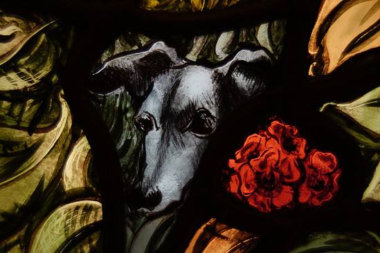 COOKE, Jonathan. Greyhounds